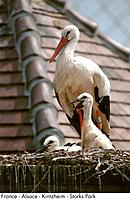France _ Alsace _ Kintzheim _ Storks Park