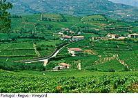 Portugal _ Regua _ Vineyard