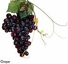 Grape