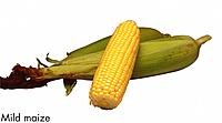 Mild maize