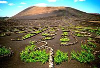 Spain _ Canary Islands _ Lanzarote _ Vine