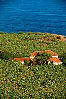 Spain _ Canary Islands _ Tenerife _ Mirador of San Pedro _ Banana