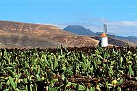 Spain _ Canary Islands _ Lanzarote _ Gatira