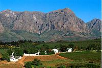 South Africa _ The Cape Vineyard _ Wine Route