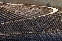 Vineyard in winter, Heilbronn, Baden_Wurttemberg, Germany