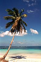 Dominican Republic _ Samana _ Las Galeras Beach