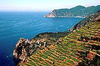 Italy _ Ligury _ Cinque Terre _ Corniglia Village