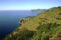 Italy _ Ligury _ Cinque Terre _ Vineyard