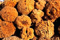 Turkey _ Mediterranean Coast _ Mugla Region _ Bodrum _ Sponge