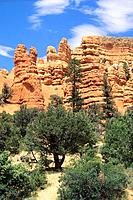USA _ National Park _ Red Canyon