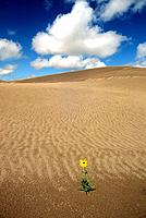 USA _ National Park _ Colorado _ Great Sand Dunes