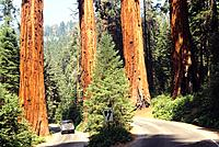 USA _ National Park _ Californie _ Sequoia