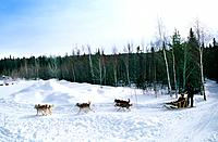 Canada _ Quebec _ Ste_Catherine_de_la_Jacques_Cartier _ Duchesnay ecotouristic resort _ Dogsled ride