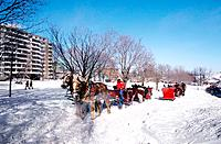 Canada _ Quebec _ Quebec city _ Snow carnival of Quebec