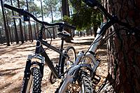 Two bicycles by tree in forest, close-up