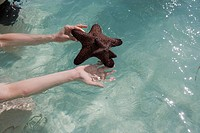Human hands holding starfish, elevated view