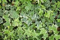 Leaves, full frame