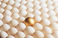 Golden Egg,Egg