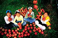 Korean Kids in the Apple Orchards