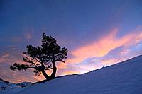 A silhouette of a tree at sunset in winter in the Sierra mountains of California