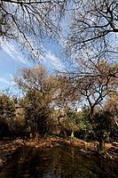 Israel Upper Galilee Tel Dan Nature Reserve