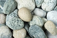 Pebbles, bird´s egg, camouflage, birds, bird_nests, ground, egg, wildbird, crakes, blesscrake, coot, Fulica atra, stones, shingle, roughly, nests, sma...