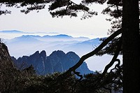 Asia, China, Anhui, Huangshan mountains, Huangshan pine, Pinus hwangshanensis, winter