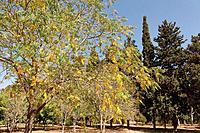 Israel Sharon region The trees garden in Ilanot