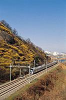 Korean Forsithia,Train,Seongdong_gu,Seoul,Korea
