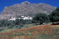 Dodecanese, Tilos Megalo Horio, general view, field with spring wild flowers