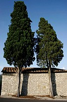 Trees in front of house , San Gimignano, Tuscany, Italy, Europe