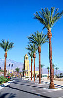Manicured palm trees in Palm Springs. California, USA