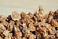 Desert roses or rosettes, in which gypsum crystals cluster together as do the petals of a rose. Tunisia