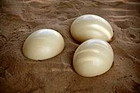 Detail view of three ostrich eggs lying the sand