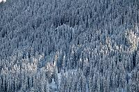 Aerial view of a snow_covered mountain forest, Switzerland