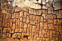 Namibia, Africa, Waterberg, Summer 2007, Africa, tree, detal, bark, structure, nature, surface
