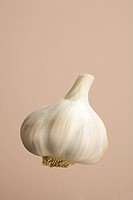 Garlic bulb