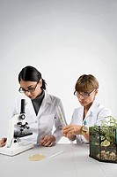 Scientists with microscope and plant