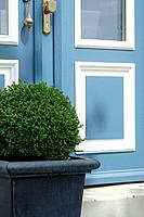 Boxwood (thumbnail)