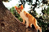 young domestic cat _ standing on tree