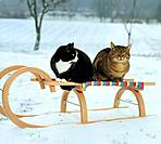 two domestic cats sitting on sled _ in snow