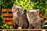 two kittens _ sitting on bank