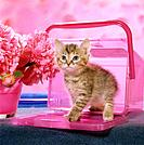 "kitten _ in pink box, Kiste, Kisten, box, boxes, Beh""lter, Behaelter, Kasten, case, chest, crate, cases, chests, crates"