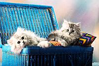 two young Persian cats _ lying in basket