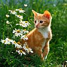 young domestic cat _ sitting on meadow next to flowers