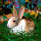young dwarf rabbit on meadow
