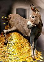 donkey with gold