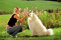 girl with Samoyed dog on meadow