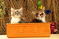 two kittens _ sitting in flower box