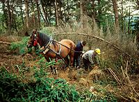 woodsmen with horse